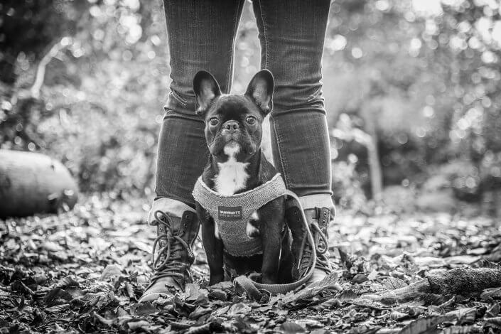 dog-photography-black-and-white