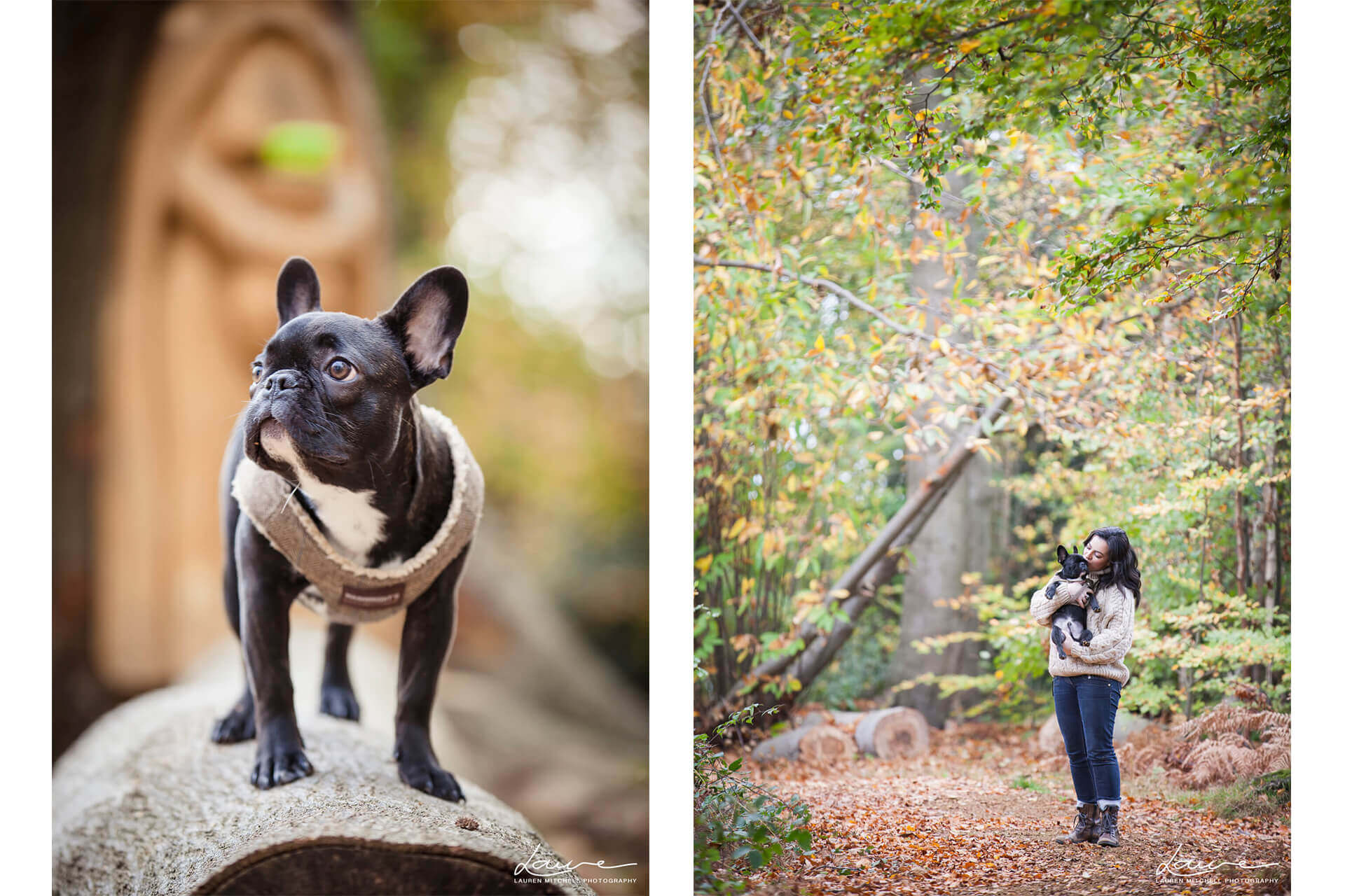 berkshire-pet-photographer