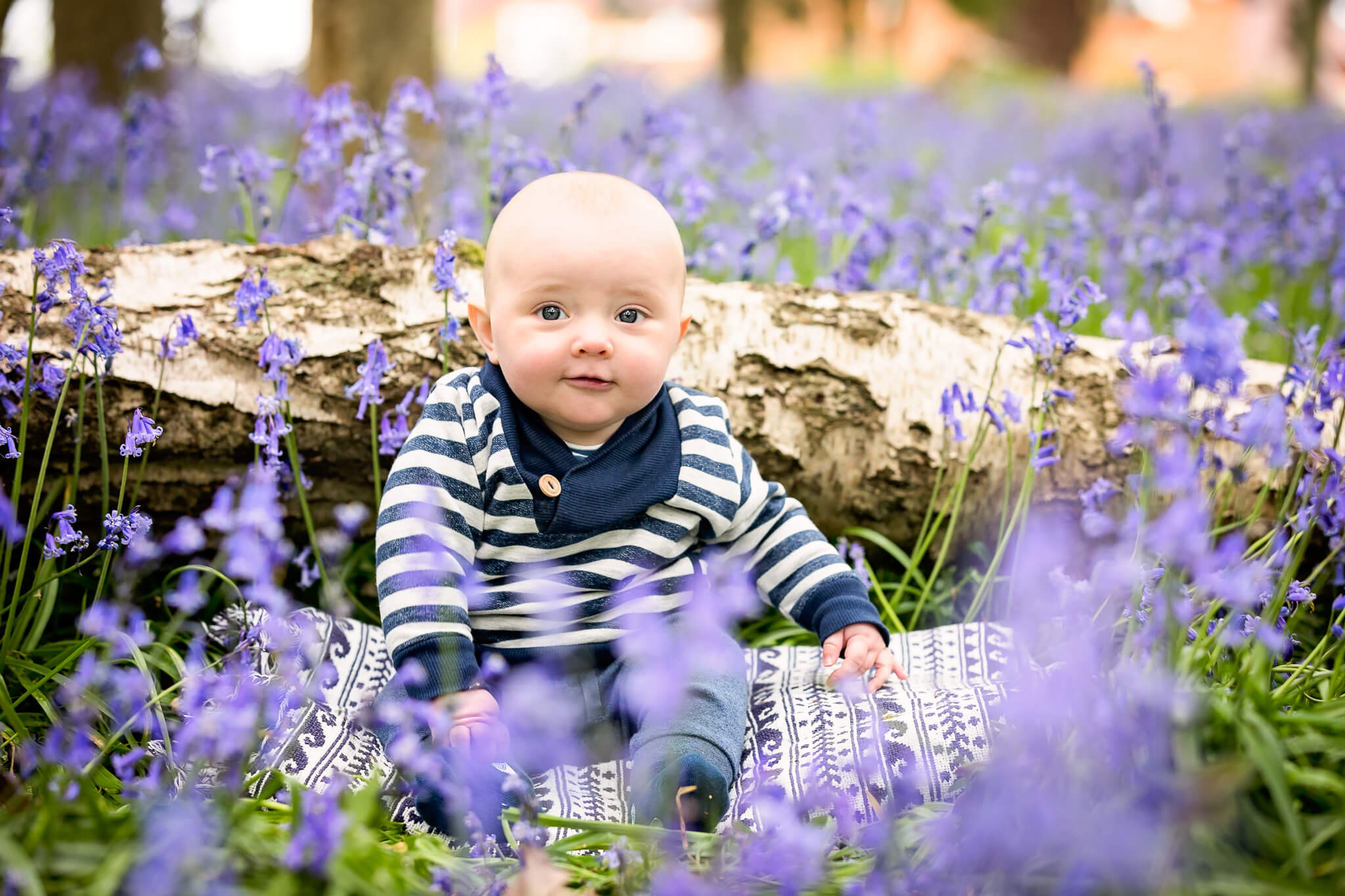 Bluebell-photography
